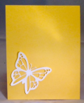 Daffodil inside card